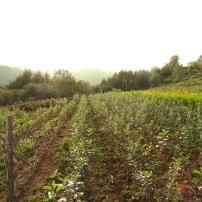 culture agriculture biologique