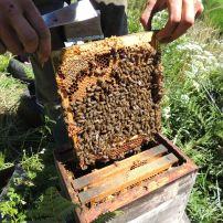 visite de ruche